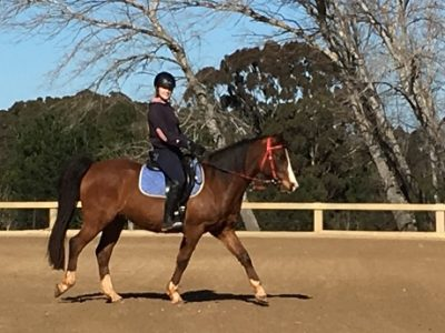 Jule riding NM Silver Knight at Jose Mendez' training centre